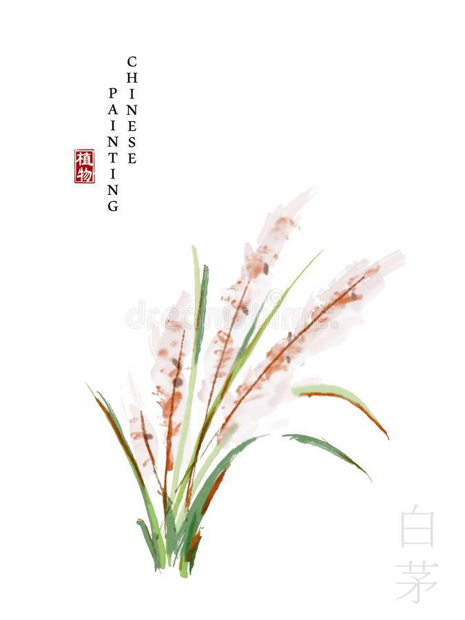 Watercolor Chinese ink paint art illustration nature plant from The Book of Songs White Cogongrass. Translation for the Chinese. Word : Plant and White stock illustration