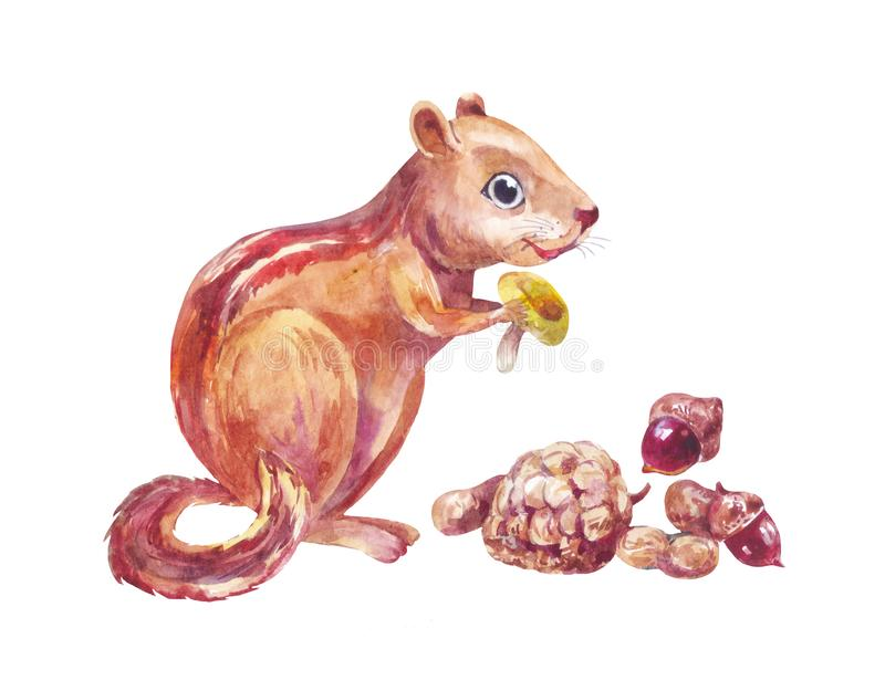 Watercolor chipmunk eats little mushroom and nuts. Cute forest striped squirrel isolated on white. Chipmunk eating nuts and mushroom. Funny little forest animal vector illustration