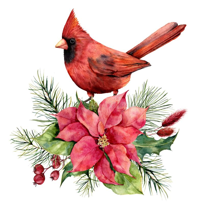 Watercolor Christmas card with cardinal, poinsettia and floral decor. Hand painted bird, traditional flower and fir stock illustration