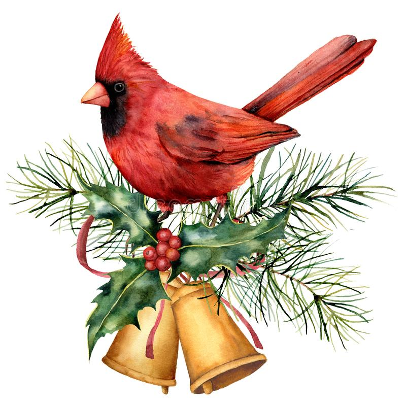 Watercolor Christmas card with red cardinal and winter design. Hand painted bird with bells, holly, red bow, berries. Fir branch isolated on white background stock illustration