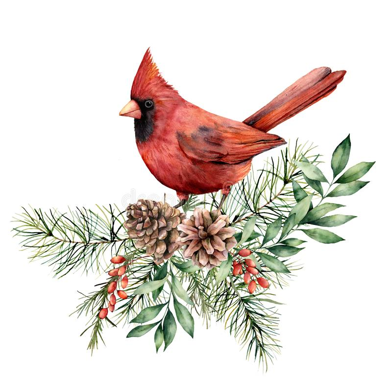 Free Watercolor Christmas Card With Cardinal And Floral Decor. Hand Painted Bird, Pine Cones, Fir And Eucalyptus Branches Royalty Free Stock Photography - 160545347