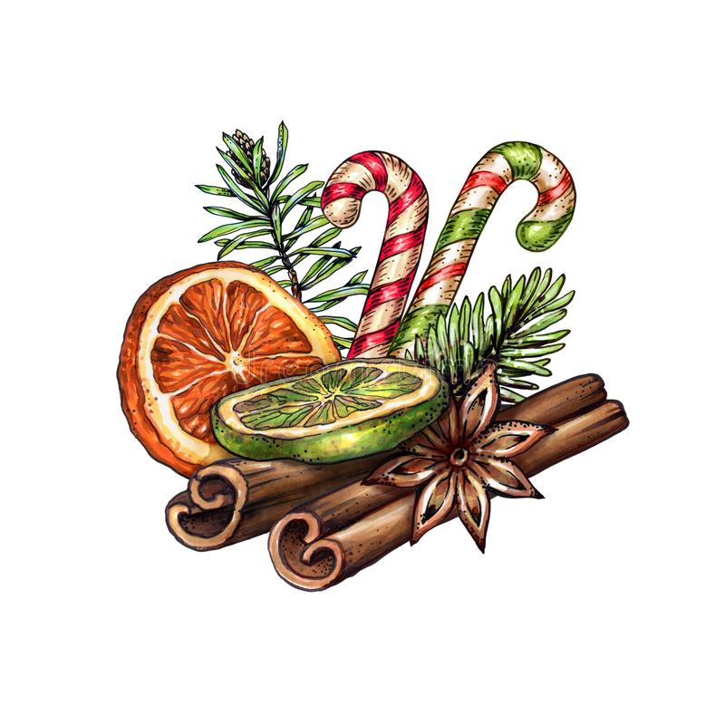 Watercolor Christmas decoration, festive food illustration, dried orange fruit, cinnamon sticks, anise, candy cane, winter. Holiday clip art isolated on white vector illustration