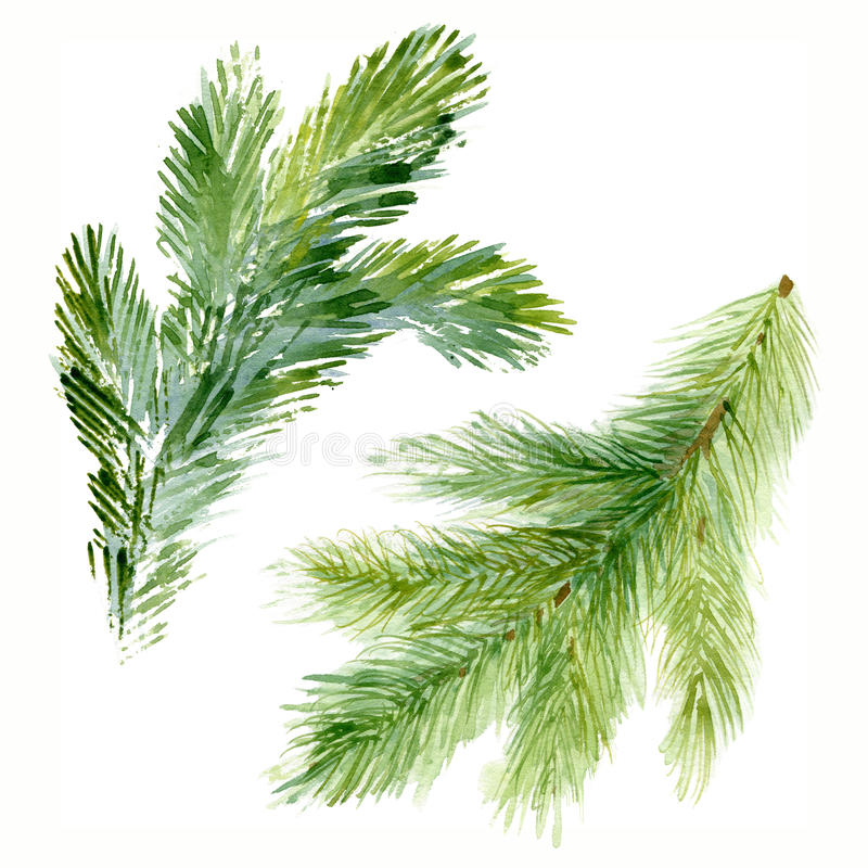 Watercolor Christmas fir-needle tree branches royalty free illustration