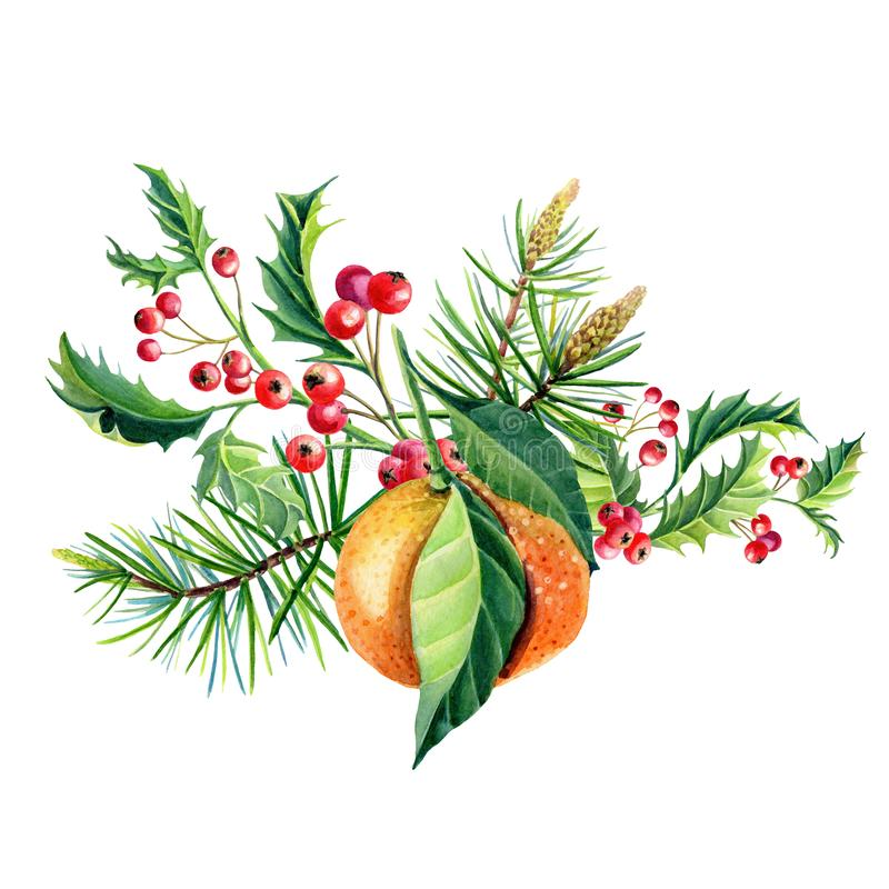 Watercolor Christmas greeting card with orange tangerine,Holly,leaves,Red berries,. Watercolor Christmas greeting card with orange tangerines,Holly,leaves,Red vector illustration