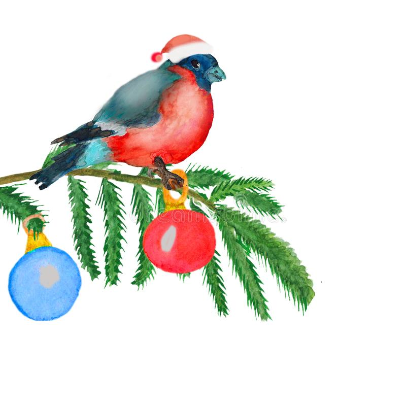 Watercolor. Christmas picture with fir branches, balls and a bullfinch. Watercolor Christmas picture with fir branches and bullfinch.Illustration for greeting royalty free illustration