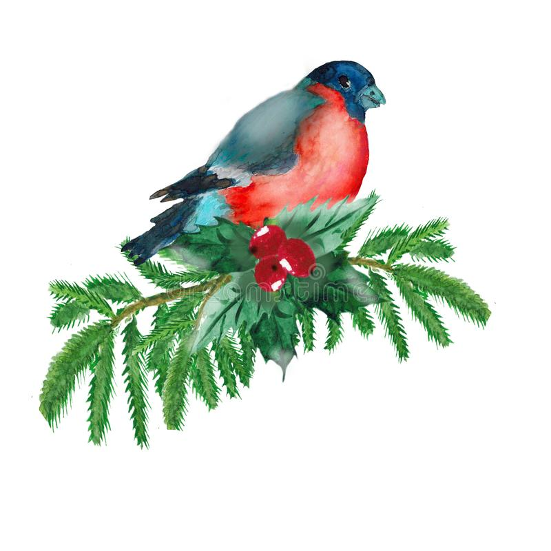 Watercolor. A Christmas picture with spruce branches, green leaves, red berries and bullfinch. Illustration for greeting cards and invitations isolated on royalty free illustration