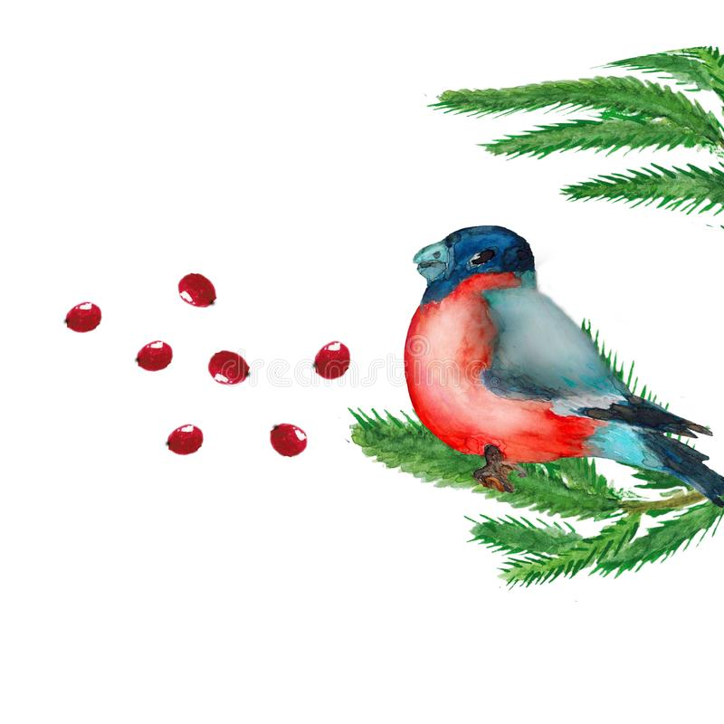 Watercolor. Christmas picture with spruce branches, red berries and a bullfinch. Illustration for greeting cards and invitations isolated on white background royalty free illustration