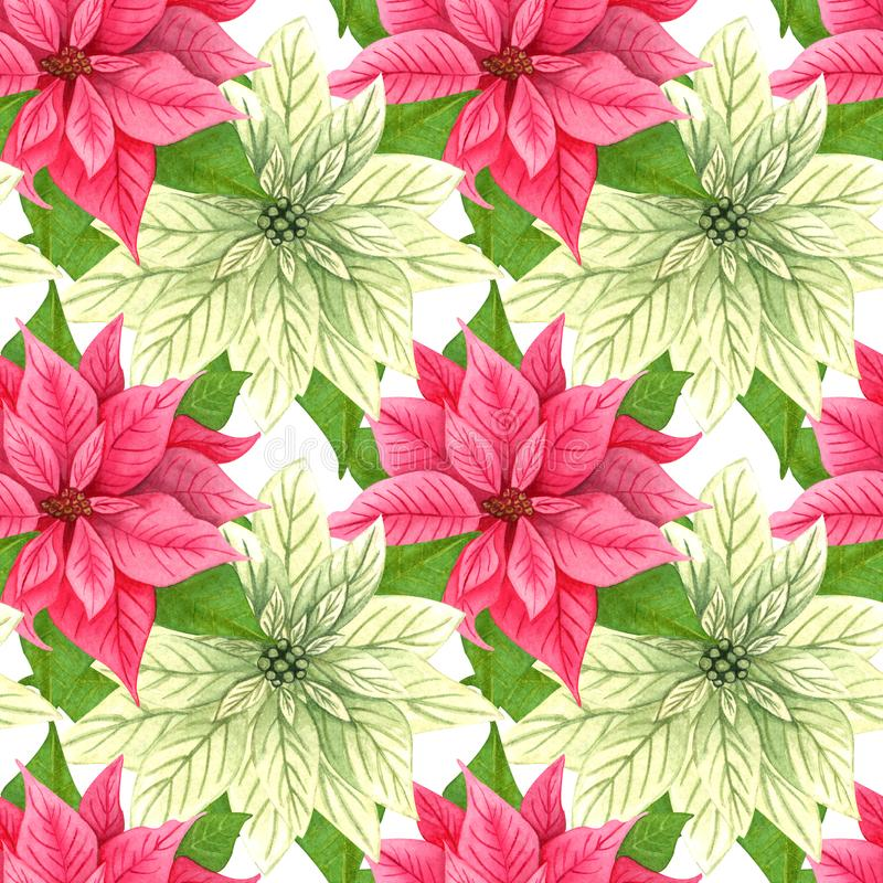 Watercolor Christmas poinsettia seamless pattern. Red and white winter flowers. repeating background. Watercolor Christmas poinsettia seamless pattern. Red and royalty free illustration