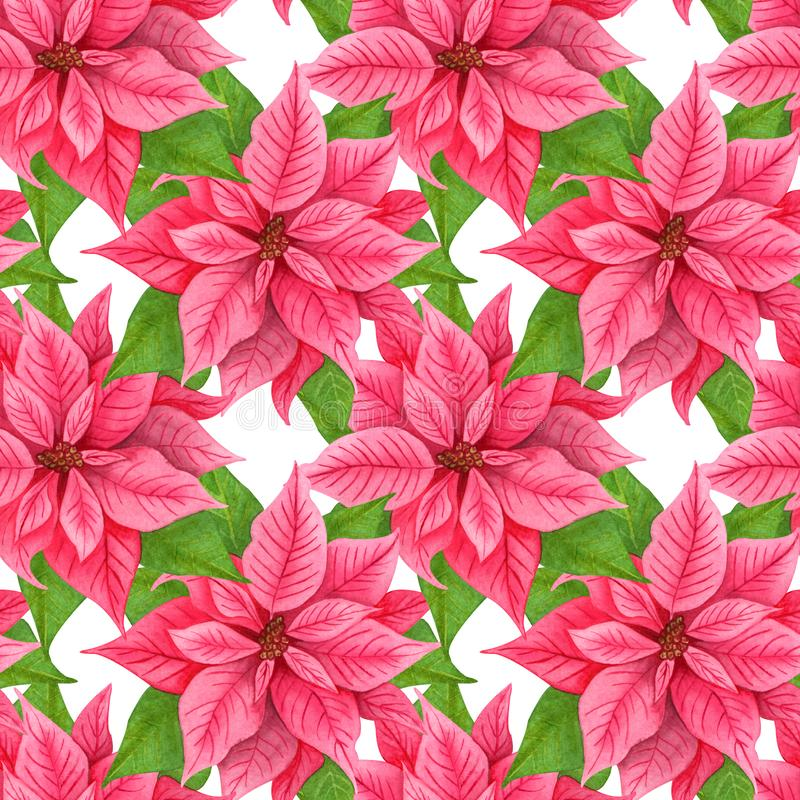 Watercolor Christmas poinsettia seamless pattern. Red winter flowers. repeating background stock illustration