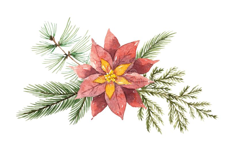 Watercolor Christmas vector bouquet with flower poinsettias and fir branches. stock illustration