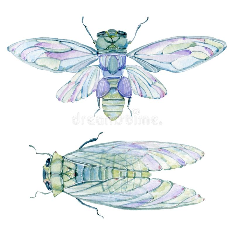 Free Watercolor Cicada. Stock Images - 100378194