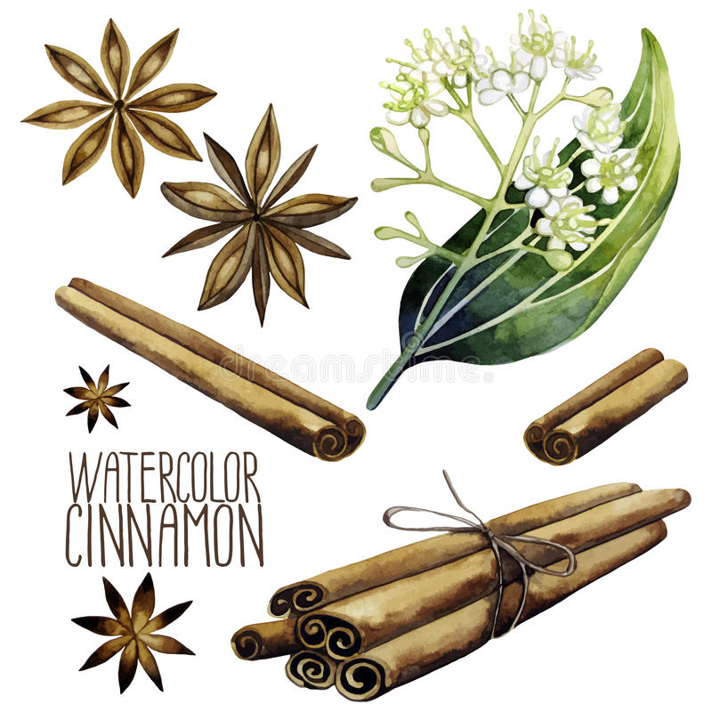 Watercolor cinnamon set. On white background. Natural spices royalty free illustration