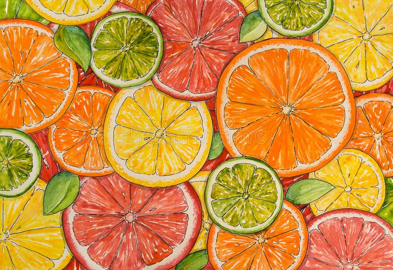 Watercolor citrus background. Paint  texture. Hand drawn oranges, lemons, limes, mandarins, grapefruits. Bright watercolor stains. For design royalty free illustration