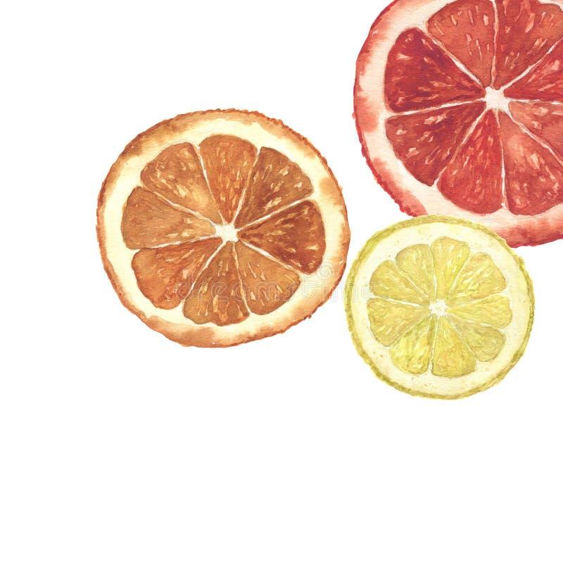 Watercolor citrus illustration. Hand painted orange, lemon and grapefruit slice background isolated on white background royalty free stock photography