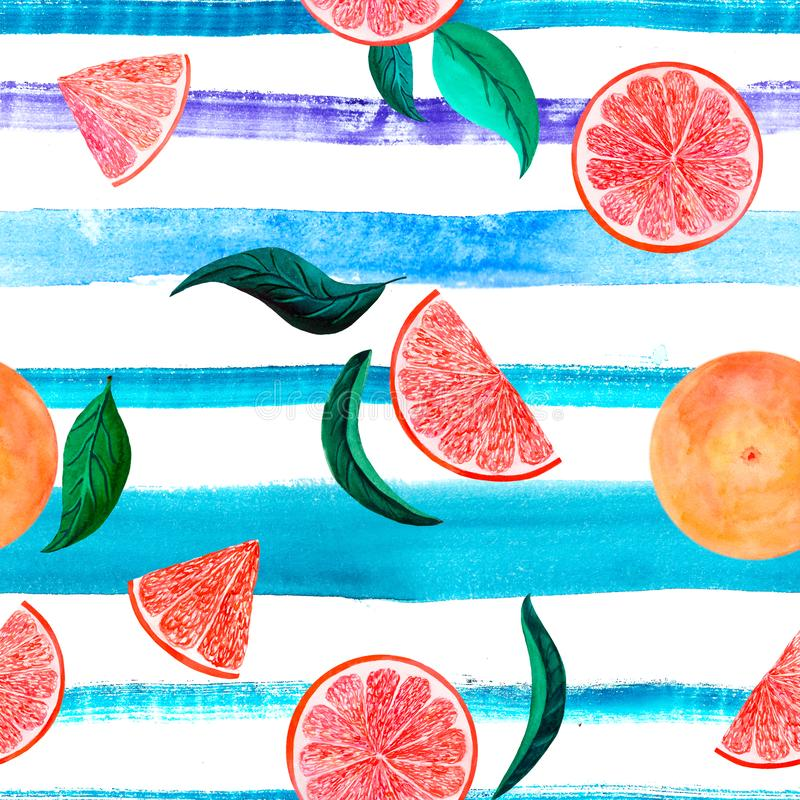 Watercolor citrus pattern grapefruit, floral seamless pattern, botanical natural illustration on turquoise violet stripe royalty free stock image