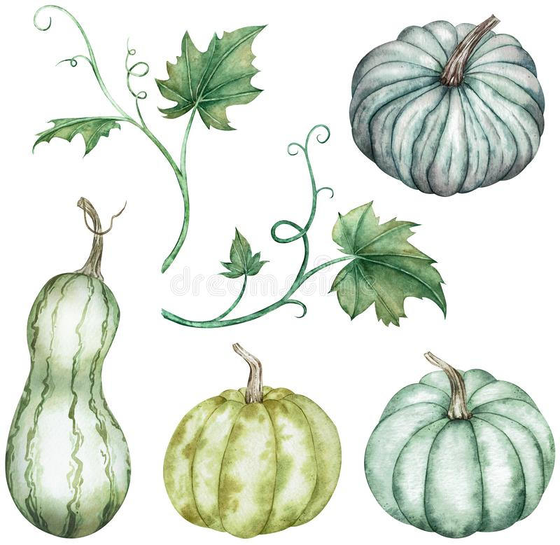Watercolor clipart of colorful pumpkins - green and blue with leaves. Thanksgiving collection of pumpkin harvest. vector illustration
