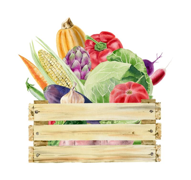 Watercolor clipart of vegetables in box. Wooden box full of fresh organic vegetables watercolor clipart isolated on white background stock illustration