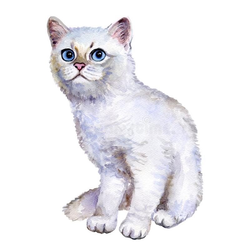 Watercolor close up portrait of popular British shorthair silver kitten isolated on white background. Sweet rare silver chinchilla stock illustration
