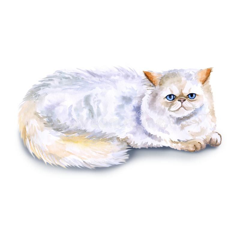 Watercolor close up portrait of popular Exotic longhair Persian cat breed isolated on white background. Cream colorpoint. Hand. Drawn home pet. Greeting royalty free illustration