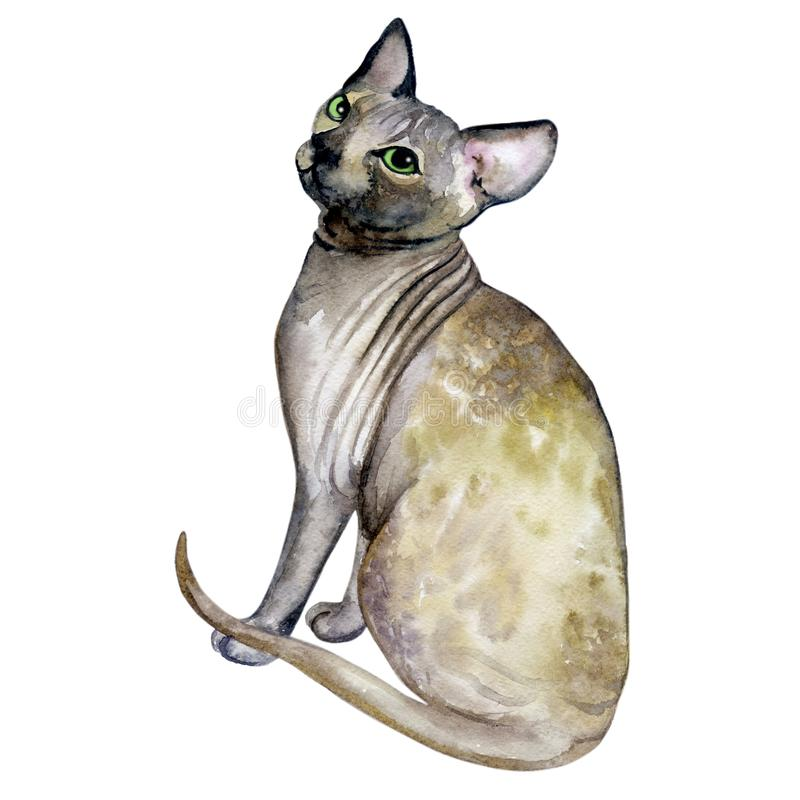 Watercolor close up portrait of popular hairless Canadian Sphynx cat breed isolated on white background. Sweet cat with no fur. Coat. Hand drawn pet. greeting royalty free illustration