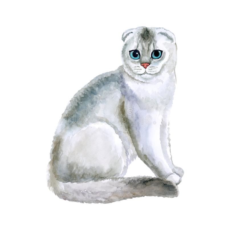 Watercolor close up portrait of popular Scottish fold shorthair cat breed isolated on white background. Loop-eared rare silver. Chinchilla colouration highland vector illustration