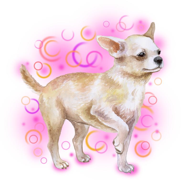 Watrcolor portrait of chihuahua dog stock illustration