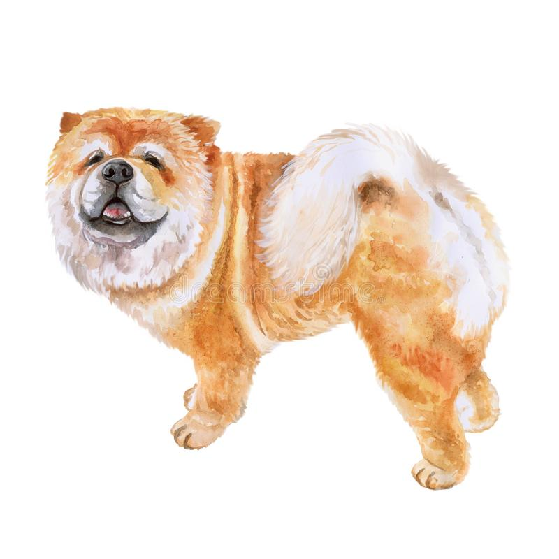 Watrcolor portrait of Chow chow dog vector illustration