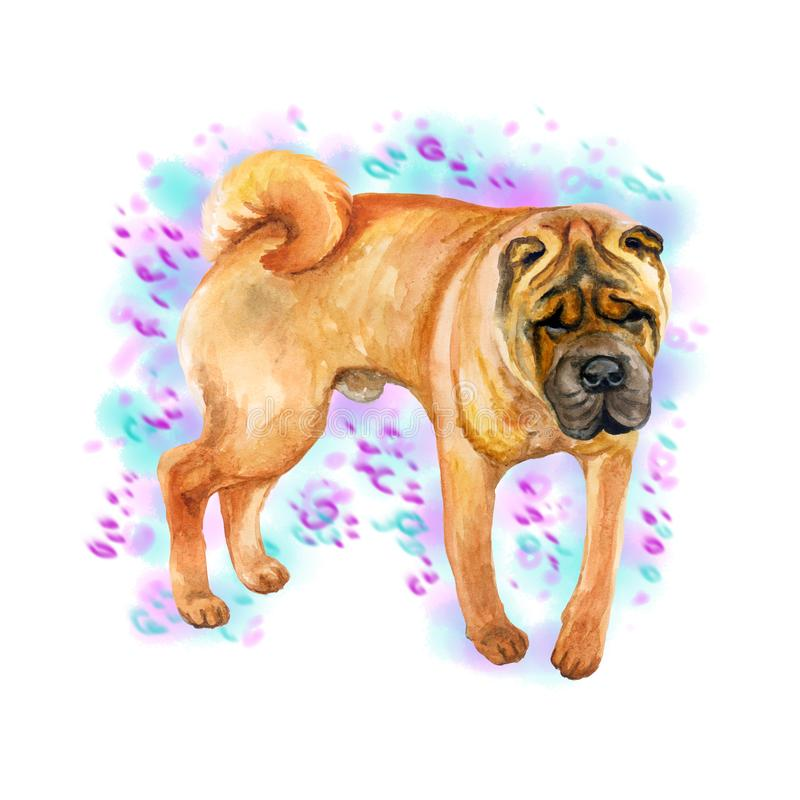 Watercolor closeup portrait of cute wrinkled chinese Shar Pei breed dog isolated on abstract background. Shorthair medium-sized. Red fawn dog. Hand drawn sweet vector illustration