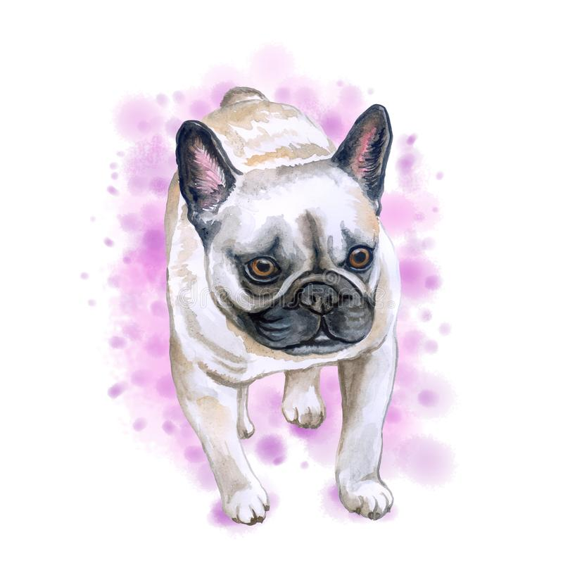 Watercolor closeup portrait of French bulldog dog isolated on pink background. Shorthair Frenchie dog. Black masked. Hand drawn royalty free illustration