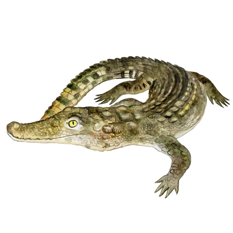 Watercolor closeup portrait of Nile crocodile animal isolated on white background. Hand drawn dangerous cold-blooded predator. Book, card, encyclopedia design vector illustration