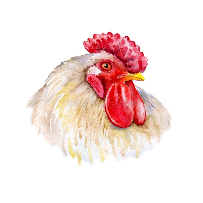 Free Watercolor Closeup Portrait Of Rooster Isolated On White Background. Hand Drawn Chinese Zodiac Symbol Of New Year 2017. Cute Royalty Free Stock Images - 156323579