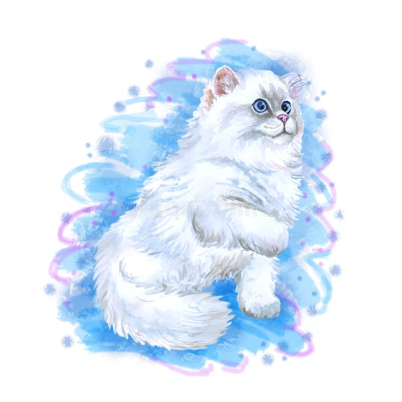 Watercolor closeup portrait of popular scottish straight longhair kitten breed isolated on blue background. Playing white fluffy. Colouration highland. Hand vector illustration