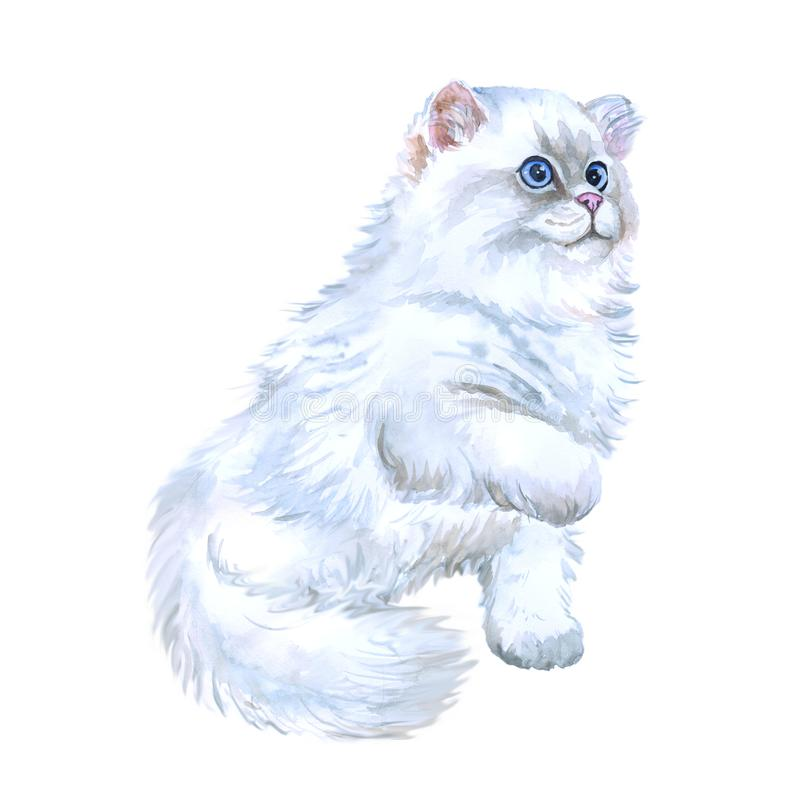Watercolor closeup portrait of popular scottish straight longhair kitten breed isolated on white background. Playing white fluffy. Colouration highland. Hand stock illustration