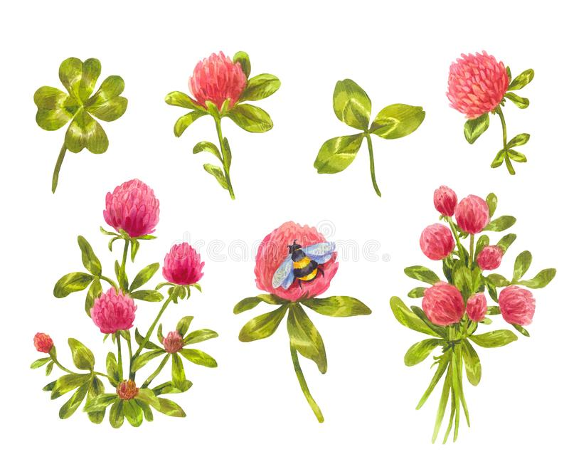 Watercolor clover set. Beautiful spring floral elements. Set of watercolor clover isolated on white. Leaves and flowers, suitable as floral elements for stickers stock illustration