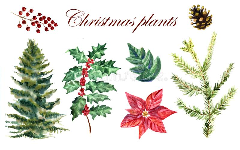 Watercolor collection of Christmas plants on a white background vector illustration