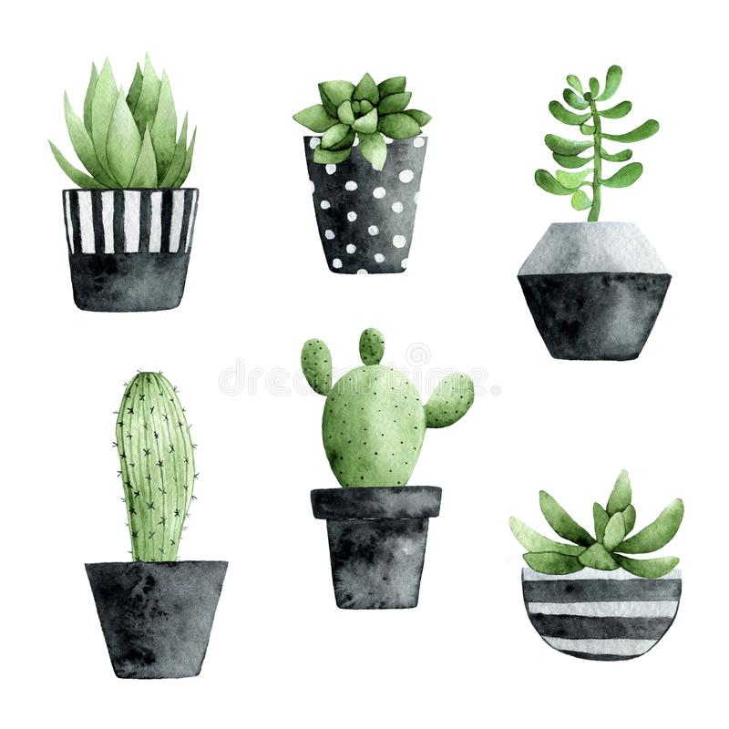 Watercolor collection with succulents and cactus royalty free stock photography