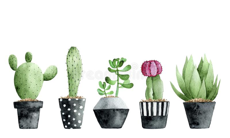 Watercolor collection with succulents and cactus on white background. stock illustration