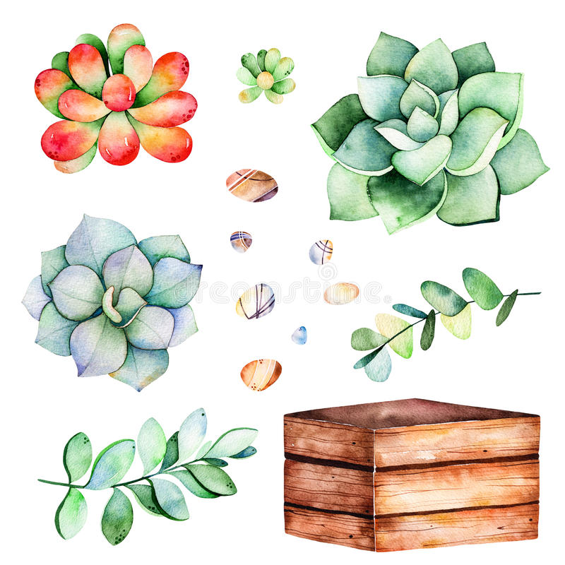 Watercolor collection with succulents plants,pebble stones, branche,wooden pot. vector illustration