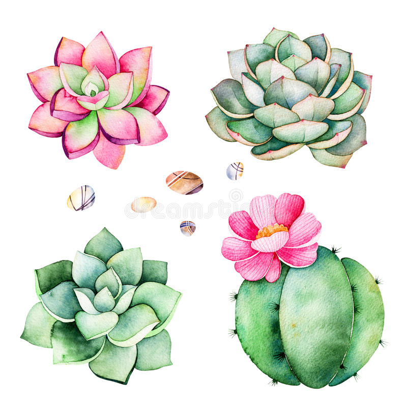 Watercolor collection with succulents plants,pebble stones,cactus. vector illustration