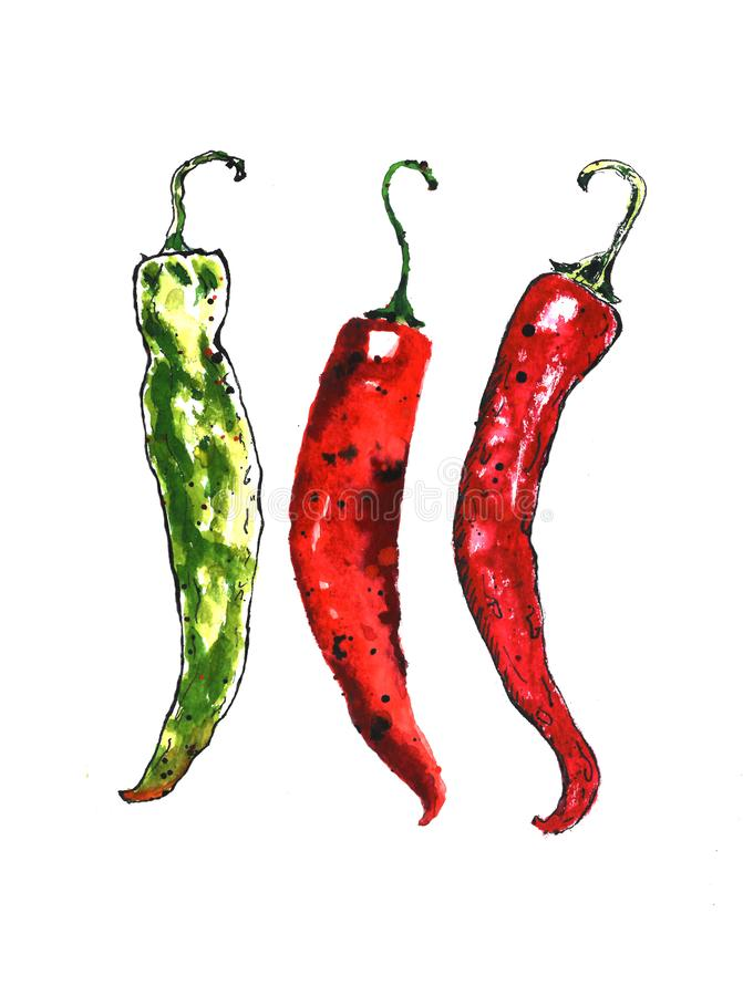 Watercolor colorful vegetables set red hot chili peppers, capsaicin closeup isolated on white background royalty free illustration