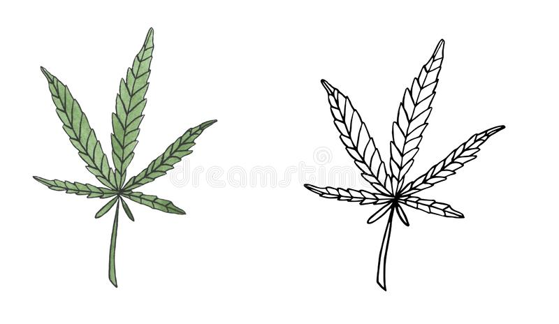 Watercolor and contour branch of Green hemp with leaves. Watercolor and contour of green branch hemp on white background vector illustration