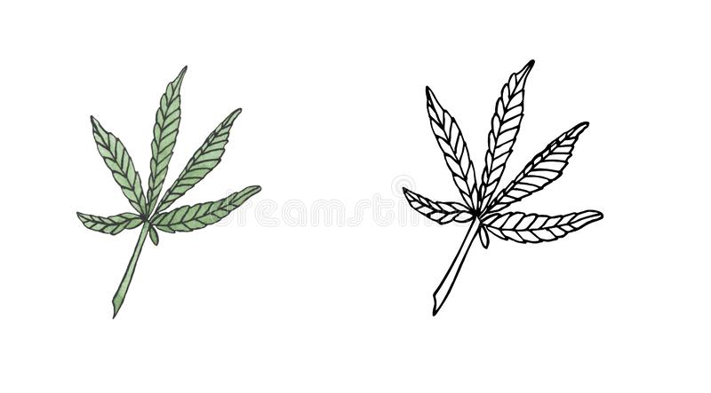 Watercolor and contour of Green hemp leave. On white background stock illustration