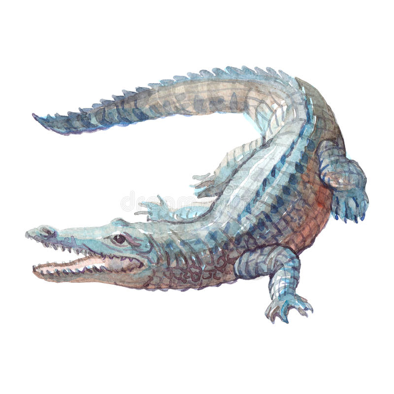 Watercolor crocodile, alligator tropical animal isolated royalty free illustration