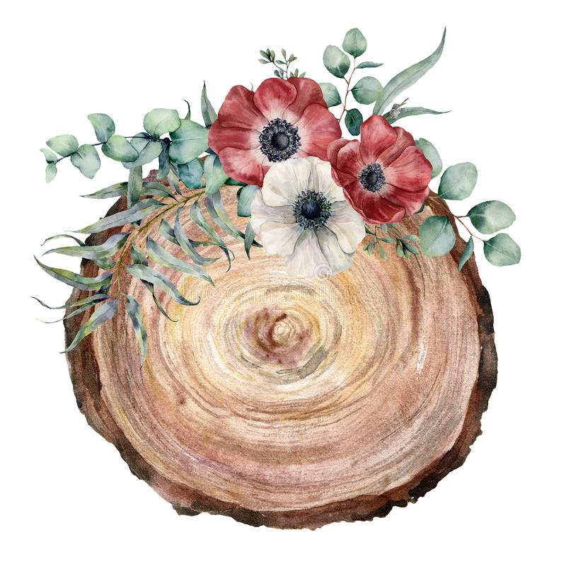 Watercolor cross section of a tree with anemone bouquet. Hand painted red and white flowers and eucaliptus leaves on vector illustration