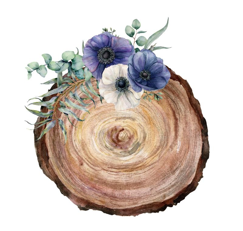 Watercolor cross section of a tree with blue and white anemone bouquet. Hand painted flowers and eucaliptus leaves on vector illustration