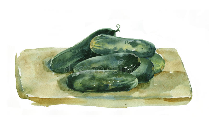 Watercolor cucumbers. stock illustration
