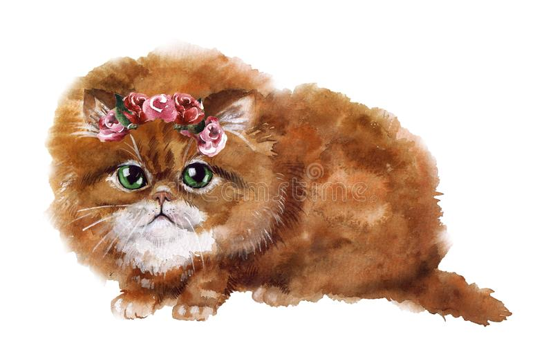 Watercolor cute cat with flowers on the white background stock illustration