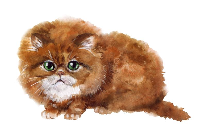 Watercolor cute cat on the white background royalty free illustration