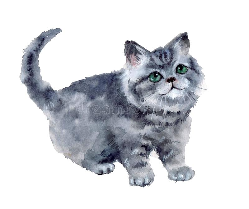 Watercolor cute cat on the white background vector illustration