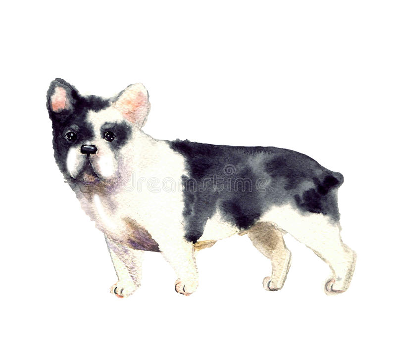Watercolor cute dog stock illustration